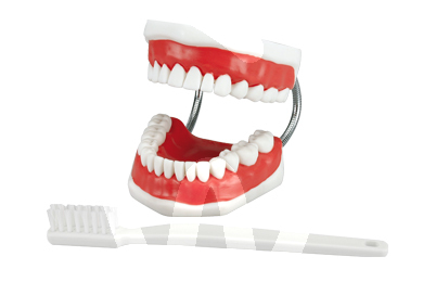 Product - DEMONSTRATION MODEL + TOOTHBRUSH