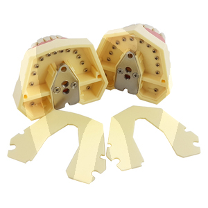 Product - CONSERVATIVE MODEL 32 SCREW-FIXED TEETH