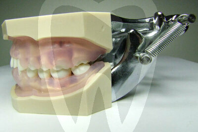 Product - HYGIENIST MODEL