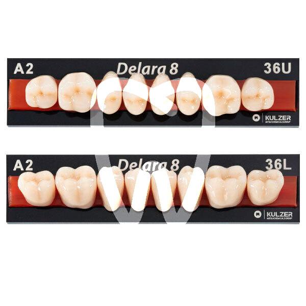 Denti Posteriori Delara